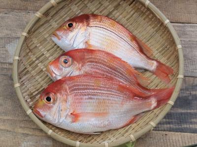 A027-2野生現撈赤鯮魚100g~120g