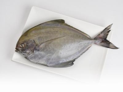 A035-12野生現撈黑鯧魚300g~350g