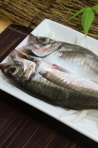 A036-2野生現撈竹筴魚200g~250g