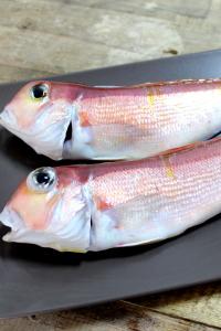 A024-1野生現撈馬頭魚兩尾真空包裝250g~300g